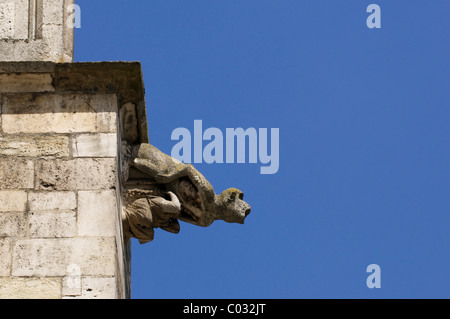 Gargoyle, monkey, sculpture on the facade of Regensburg Cathedral, Regensburg, Upper Palatinate, Bavaria, Germany, - Stock Photo