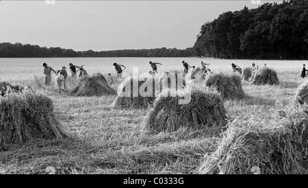 HARVESTING SCENE THE WHITE RIBBON (2009) - Stock Photo