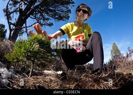 A hiker woman watching a young Scots pine (Pinus sylvestris). France. Randonneuse observant un jeune pin sylvestre - Stock Photo