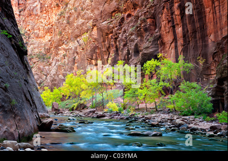 Fall colored trees in Virgin River Canyon. Zion National Park, UTah. - Stock Photo
