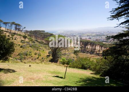 Slopes of Devils Peak viewed from Rhodes Memorial - Stock Photo