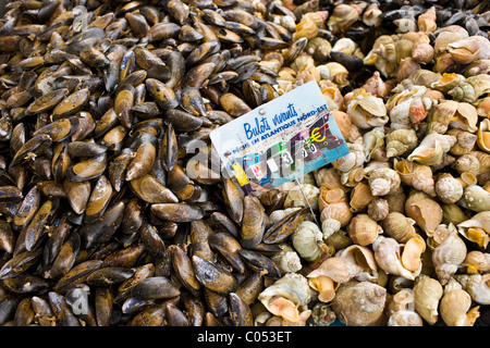 Live Mussels, bulots vivant, and whelks sea snails, on sale at farmers market in Normandy, France - Stock Photo