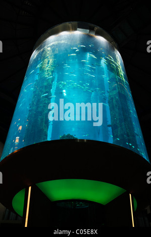 Fish aquarium at 5 stars Radisson SAS Hotel Berlin, the world's largest cylindrical aquarium, Berlin Germany - Stock Photo