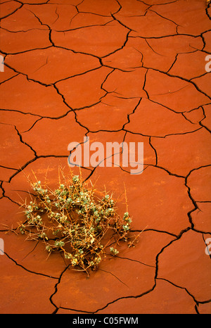 Small plant barely surviving in dried cracked red mud in Utah's Capitol Reef National Park - Stock Photo