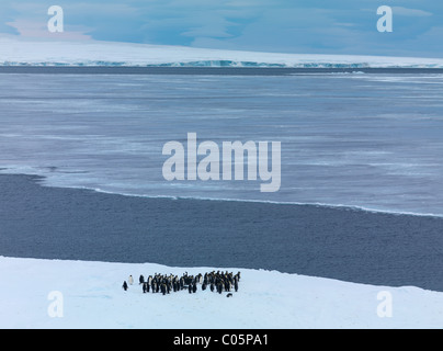 Emperor penguins gathering at ice edge before jumping into sea, October, Snow Hill Island, Weddell Sea, Antarctica. - Stock Photo
