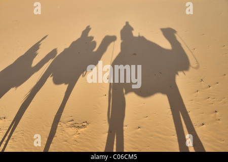 Dromedaries (Camelus dromedarius), desert trekking, Erg Chebbi, Morocco, Africa - Stock Photo