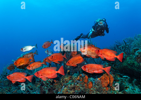 Scub diver with an underwater camera, underwater photographer, shoal of Red Bigeye (Priacanthus hamrur) swimming - Stock Photo