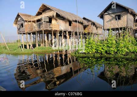 Stilt houses with a floating garden built by the Inthas in Maing Thauk on the Inle Lake, Shan State, Myanmar, Burma - Stock Photo