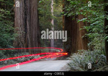 Car lights on a bumpy road, Jedediah Redwoods, California Coast, California, USA - Stock Photo