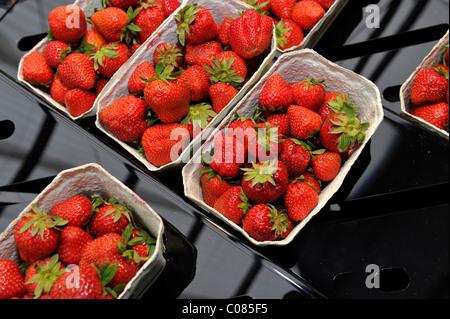 Strawberries on display, food market, retail - Stock Photo