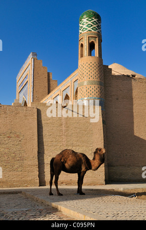 Camel in front of Muhammad Rakhim Chan Madrassah, Ichan Kala, historic adobe town of Khiva, Chiva, Silk Road - Stock Photo