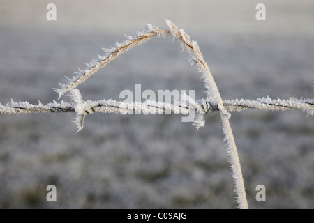 Hoar frost on grasses and barbed wire fence, Hertfordshire, England, United Kingdom - Stock Photo