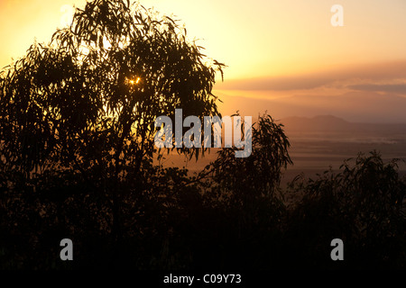 Eucalyptus gum tree at sunset, an Australian iconic image. Australia - Stock Photo