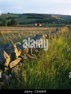 Summer Evening, Longnor