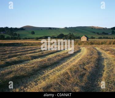 Field Patterns, Longnor