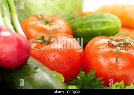 Radish growing pot fresh garden vegetable red eat sharp salad summer stock photo royalty free - Salads can grow pots eat fresh ...