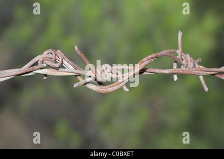 Rusted barbed wire on green background - Stock Photo