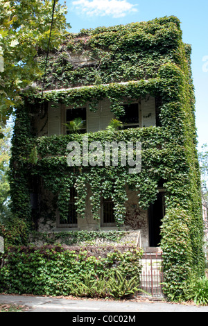 Sydney terraced house covered in green ivy foliage, NSW, Australia - Stock Photo