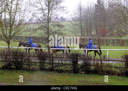 Racehorses being exercised on a wet February morning on the famous trainer Jonjo O'Neill's estate Jackdaws Castle - Stock Photo