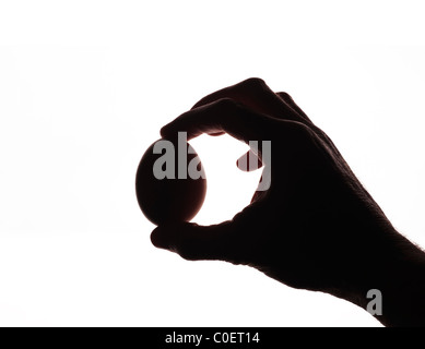 Hand holding an egg on a white background - Stock Photo