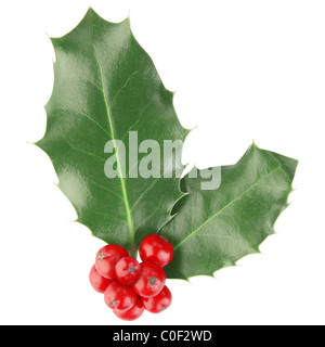 Holly isolated on white - Stock Photo