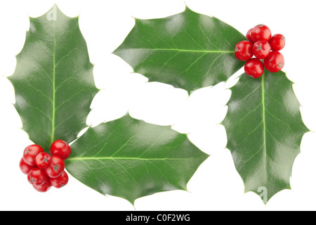 Holly corner isolated on white, clipping path included - Stock Photo