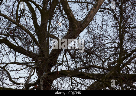 Bare tree branches against twilight sky - Stock Photo