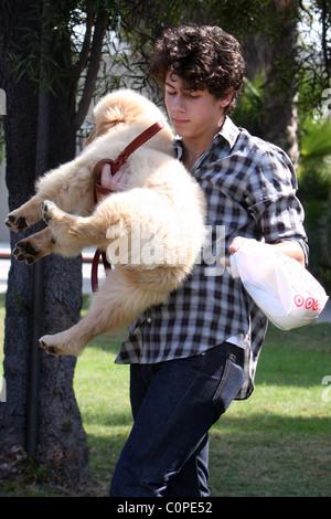 Jonas' 16th birthday present pooch has parasites Teen pop star NICK JONAS' 16th birthday present puppy came with - Stock Photo