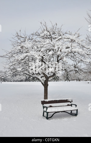 Tree and bench covered with snow in Washington Park, Albany - Stock Photo