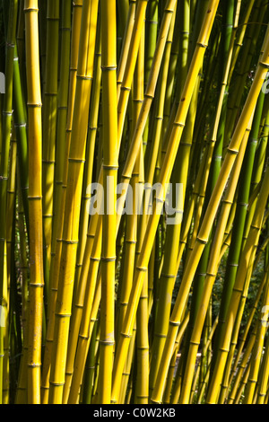Abstract image of a bamboo grove - Stock Photo