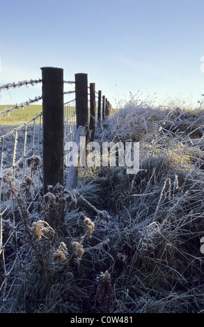 Barbed wire fencing covered by hoar-frost at the fields of Fawsley Estate, Northamptonshire, UK. - Stock Photo