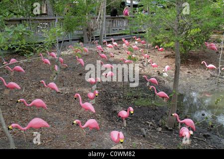 ... Orlando Florida Sanford Central Florida Zoo U0026 And Botanical Gardens  Pink Plastic Flamingos   Stock Photo