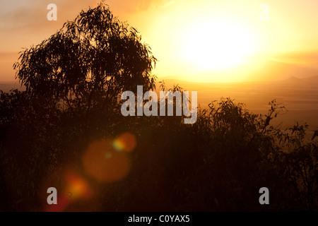 Eucalyptus gum tree at sunset with lens flare, an Australian iconic image. Australia - Stock Photo