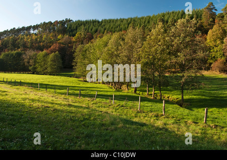 Meadow valley in autumn, Aselbach, Nationalpark Kellerwald-Edersee national park, Hesse, Germany, Europe - Stock Photo