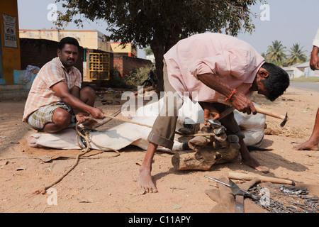 Ox being shoed with horseshoes, near Mysore, Karnataka, South India, India, South Asia, Asia - Stock Photo