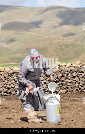 Dairy cow farming, woman filling fresh cow's milk into a milk churn, Altiplano Bolivian highland, Oruro Department, - Stock Photo