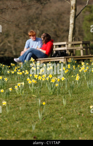 Couple sitting on park bench with daffodils Garden of Knightshayes House NT Tiverton Devon UK - Stock Photo