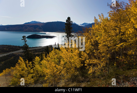 Indian summer, poplar trees in fall colours, view from Sheep Mountain over Kluane Lake, St. Elias Mountains - Stock Photo