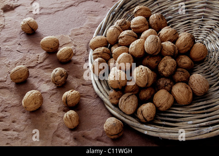 Walnuts (Juglans) tipped from a wicker plate on sandstone - Stock Photo