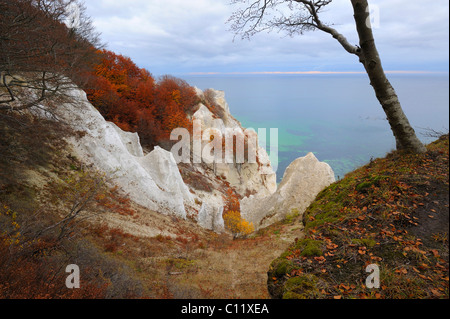 Autumn mood, chalk cliffs and Baltic Sea, Moen island, Denmark, Scandinavia, Europe - Stock Photo