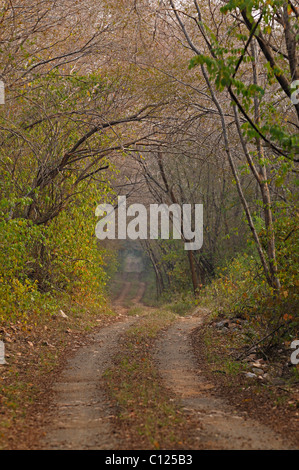 Track through the jungles of Ranthambore National Park, Rajasthan, India, Asia - Stock Photo