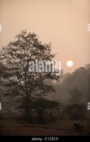 Jungles of Ranthambore National Park at sunrise, Rajasthan, India, Asia - Stock Photo