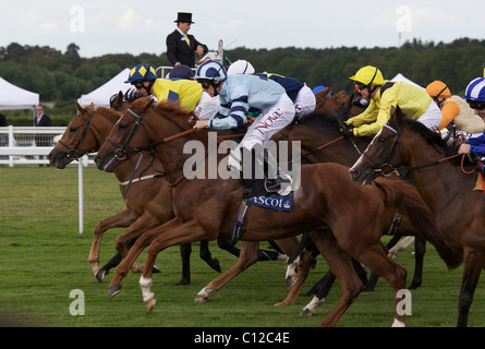 Horses at the start of a race during the race meeting at Royal Ascot Race Course. - Stock Photo