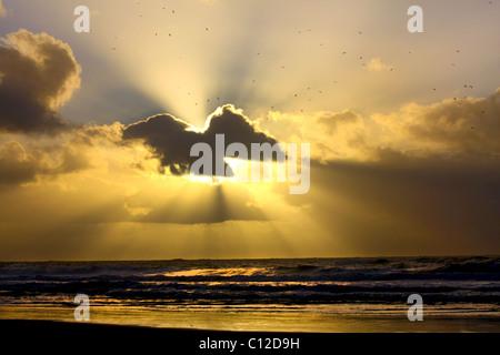 40,151.06068a Sun rays sunbeams flying birds seagulls gulls dark clouds cloud layers golden glow shining ocean waves - Stock Photo