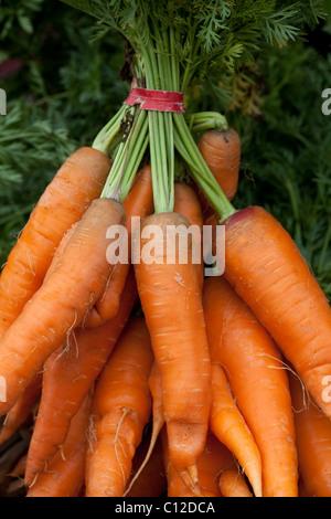 Freshly harvested organic carrots at Sebastopol farmer's market, Sonoma County, California, USA, North America. - Stock Photo