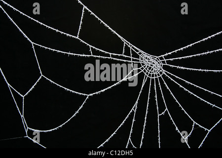 40,176.06388 icy ice cold white frosted frosty spider web on black against a black background - Stock Photo