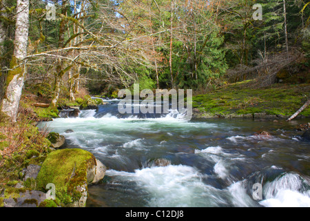 40,237.06527a Twisting creek water river stream with rapids flowing through spring green deciduous & conifer tree - Stock Photo