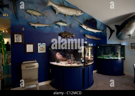 The Florida Oceanographic Coastal Center in Stuart ,Florida houses a display of local fish and other marine life - Stock Photo