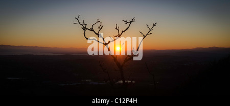 Sun setting behind a beautiful bare tree in silhouette. - Stock Photo