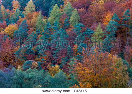 Mixed Woodland, autumn colour, Lower Saxony, Germany - Stock Photo